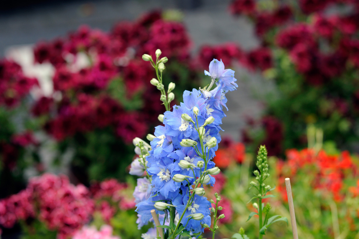 big 1116 Flowers 1 - Bahar k Khubsurat Rang