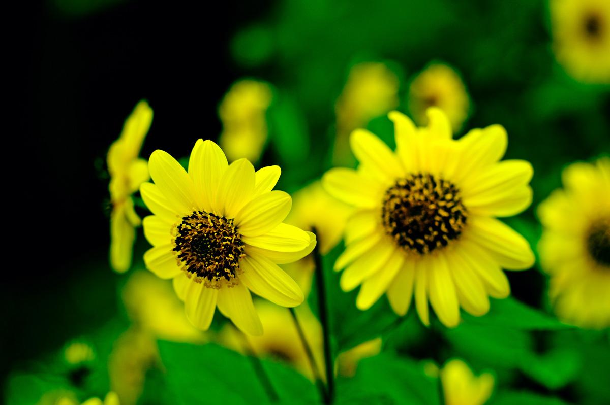 Your flower photos - please share! :-)
