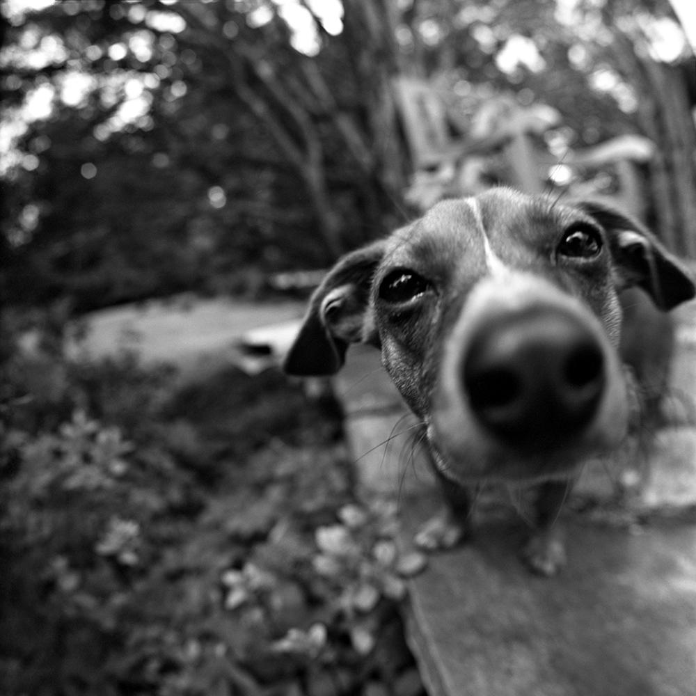 Zorki My Dog Kiev 88 Zodiak 30mm Pan50 Xtol 1 1