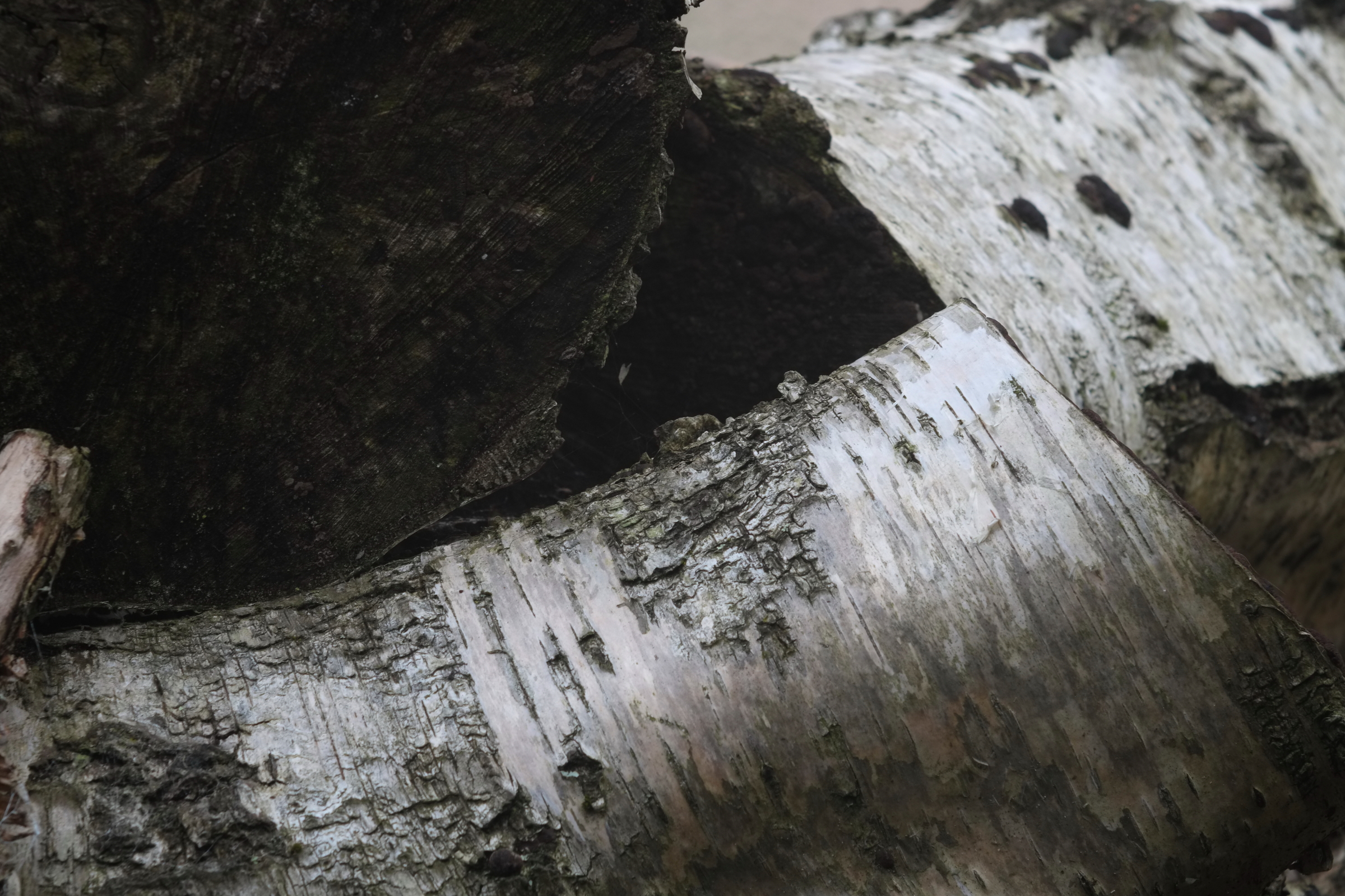 steinheil munchen cassar 75mm